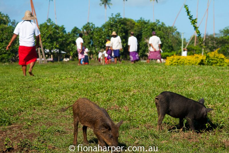 Villagers gather for game of kili kiti, a form of Samoan cricket