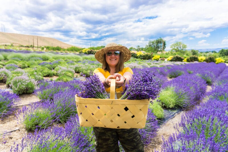 Pick Your Own Lavender At Sage Creations' Lavender Farm in