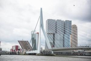 Erasmusbrug (bridge) in Rotterdam