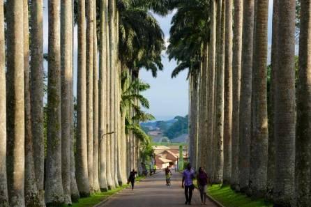 Aburi Botanical Gardens Alley