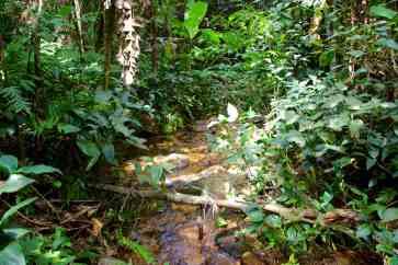 crossing a jungle stream