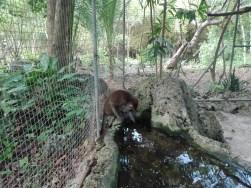Bantayan Nature's Park