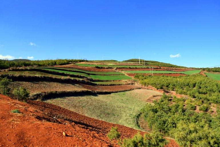 האדמה האדומה נחשפת במלוא הדרה (צילום: טל ניצן)
