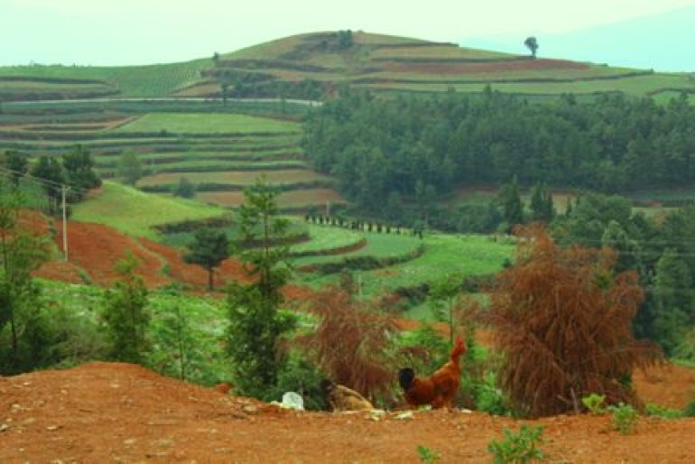 לצבע האדום משתדך הצבע הירוק של גידולי השדה (צילום: גיל טובול)