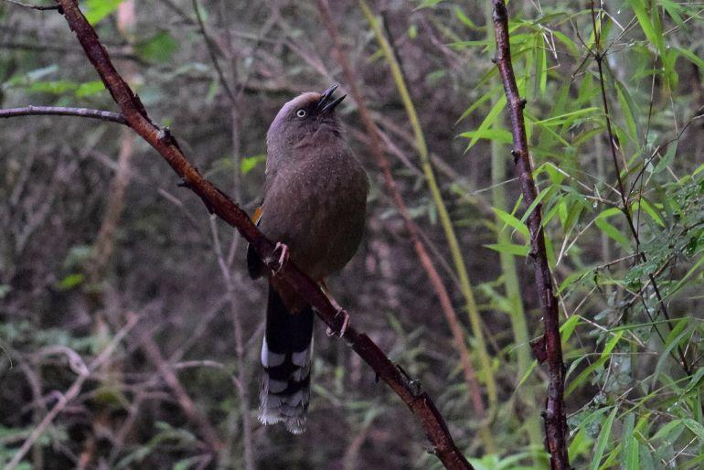 מעל 140 מיני ציפורים מתעופפות בפארק (צילום: טל ניצן)