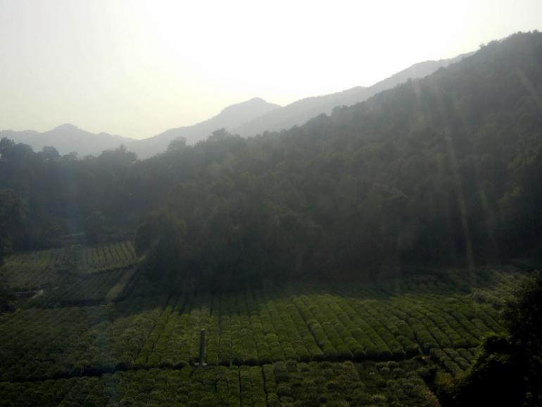 מחלון הרכבל נשקפים מטעי התה של האזור (צילום: סרפין טולט)