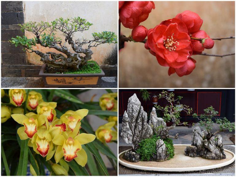 פרחים ועצי בונזאי בגני משפחת דז'ו (צילום: טל ניצן)