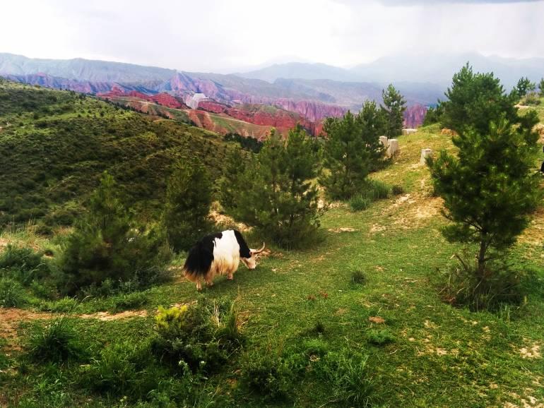 השדות הירוקים של פארק קאנבולה (צילום: גיא להב)