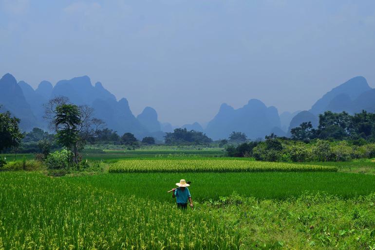 איכר מעבד את השדות בדרך לגשר יולונג (צילום: טל ניצן)