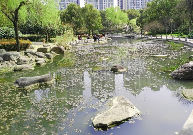 פארק שו-ג'יה-חווי (צילום: נוגה פייגה)