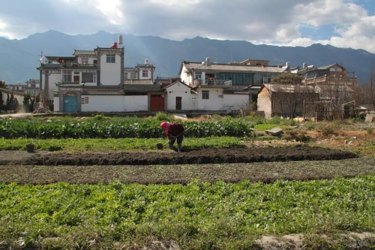 כפרים חקלאיים מקיפים את דאלי (צילום: יובל לוי)