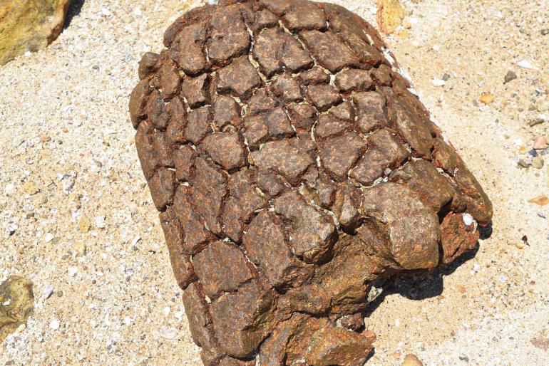 אבנים בשביל המחבר את האי החד עם האי קיו טאו (צילום: טל ניצן)
