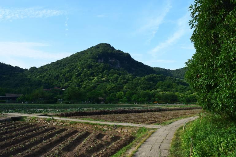 שבילי הליכה בין חלקות שדה הבא-גואה (צילום: טל ניצן)