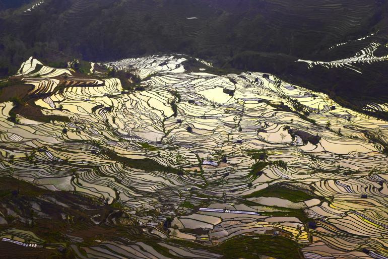 טראסות האורז של יואן-יאנג בפברואר צילום: טל ניצן)