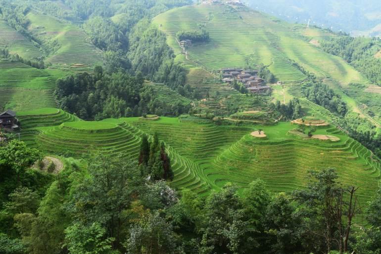 לונגג'י. טראסות אורז מרהיבות (צילום: טל ניצן)