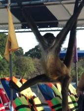 That very cheeky monkey