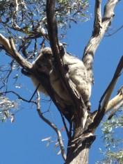 Australia 2008 037