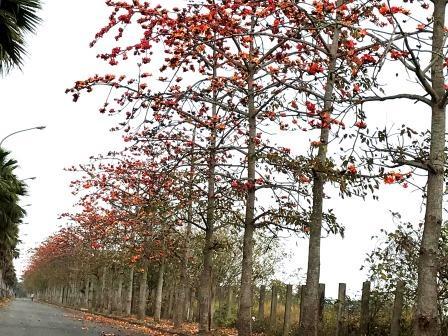 台南木棉花季,賞景還能參加攝影比賽