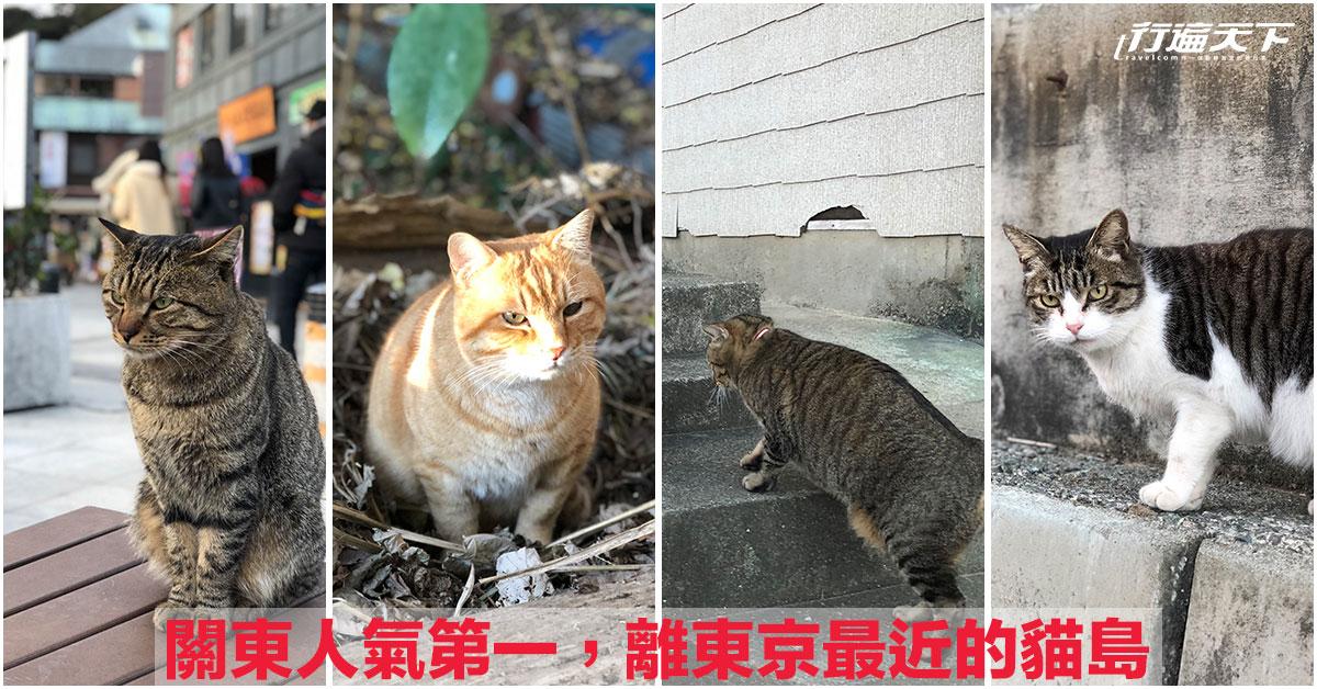 關東人氣第1的貓島,來東京千萬不能錯過