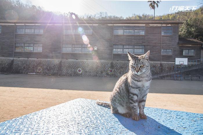 日本岡山私房5玩法  走訪真鍋島、丹寧街
