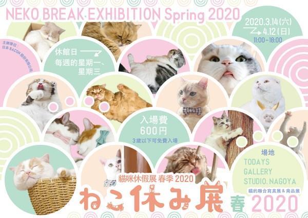 春天賞花不稀奇,名古屋決定來賞「貓咪」
