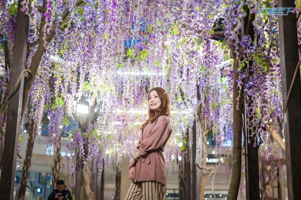 MITSUI OUTLET PARK,林口,紫藤花海秘境,野餐
