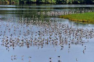候鳥,金城湖,17公里,紅樹林
