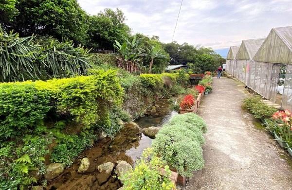 台北市,內湖,清香休閒農場, 農園,採果,親子遊