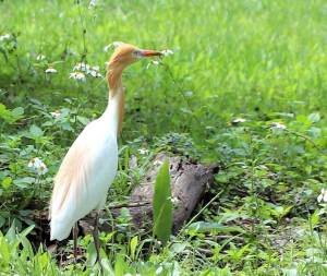台北市,關渡自然公園,賞鳥,濕地生態,海岸林區