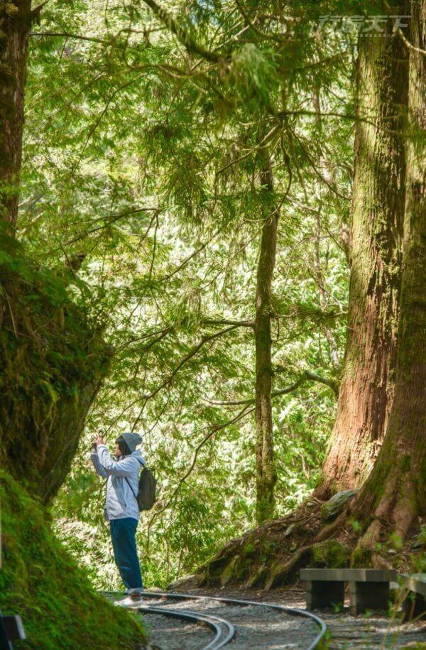 全球最美秘境步道在宜蘭 這個角度最好拍 5