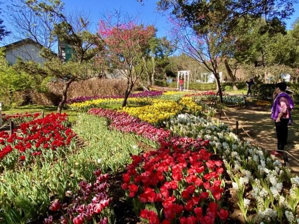 台北,陽明山花季,花卉試驗中心,春櫻祈福,陽明公園花鐘
