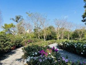 台北,繡球花,杜鵑花,花海,大安森林公園,杜鵑冶園