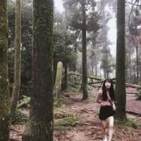 台北旅遊|陽明山上竟然藏著祕境 竹子湖黑森林彷彿走入精靈的世界