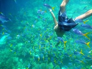 帛琉,旅遊泡泡,雄獅