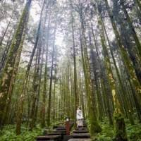森林療癒|走進山林間享受芬多精 這5件事你一定要先學會