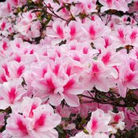 台北旅遊|連台北人都不太知道的賞花秘境 重點還免門票