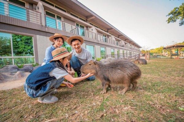 新竹,六福莊,水豚,福豚,動物派對