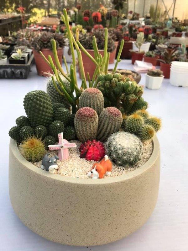succulents,多肉植物,桃園,手作