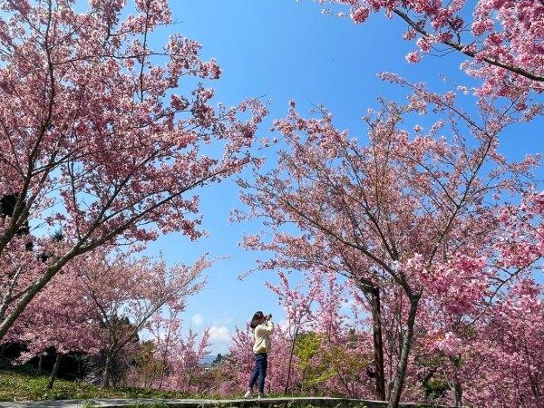 台中旅遊,宜蘭住宿,福壽山,賞櫻,地景藝術