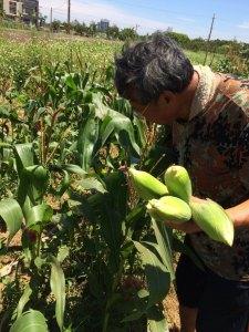 桃園,農事體驗,時令蔬菜,友善農耕,小小農夫,親子體驗