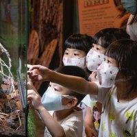 新竹旅遊|大昆蟲展老師首次打造飯店沉浸式生態互動展 讓小孩變身動物一站體驗大自然