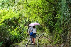 花蓮景點,池南國家林遊樂區,蒸汽火車,鯉魚山步道,森林浴