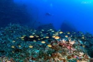屏東,墾丁,珊瑚,潛水,馥蘭朵