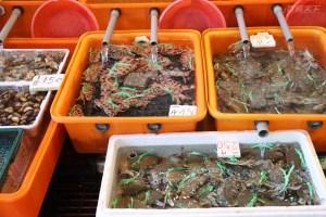萬里,萬里蟹,螃蟹,龜吼漁港,花蟹,三點蟹,石蟳