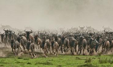 Tanzania – najlepsze safari w Afryce