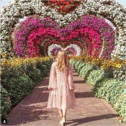 Miracle Garden w Dubaju – Morze kwiatów na środku pustyni