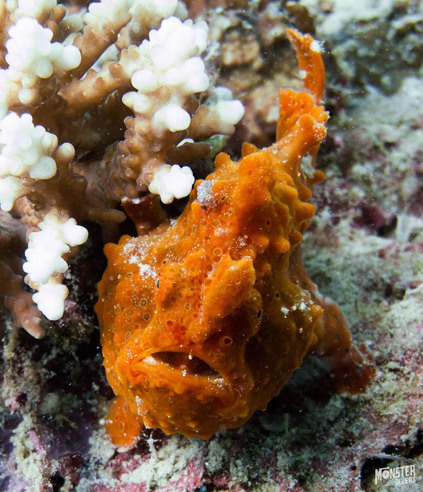 diving pulau weh dangerous photo