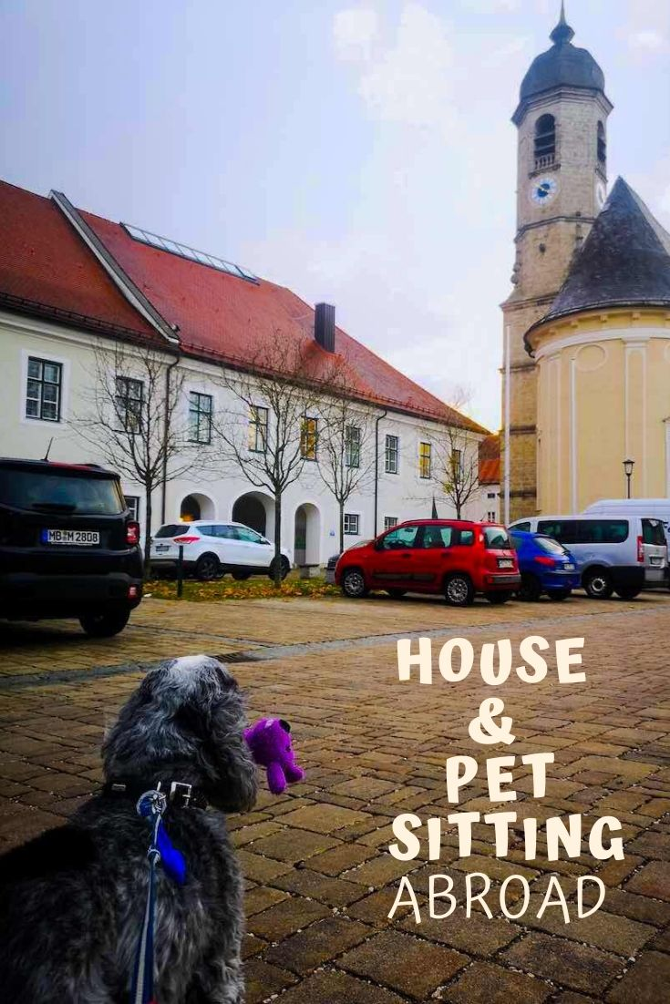 house pet sitting abroad pinterest