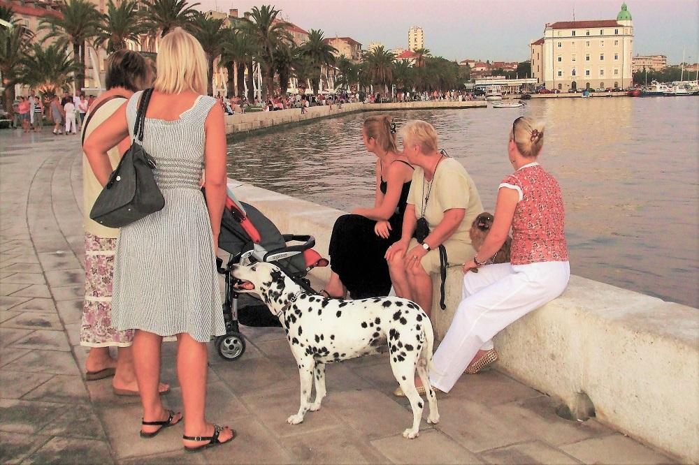 Dalmatian dog Dalmatian Coast Croatia Split