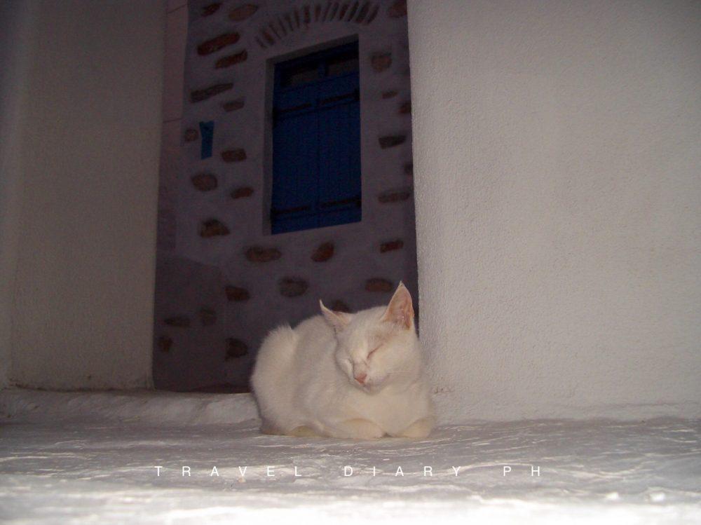 Gatto bianco di sera
